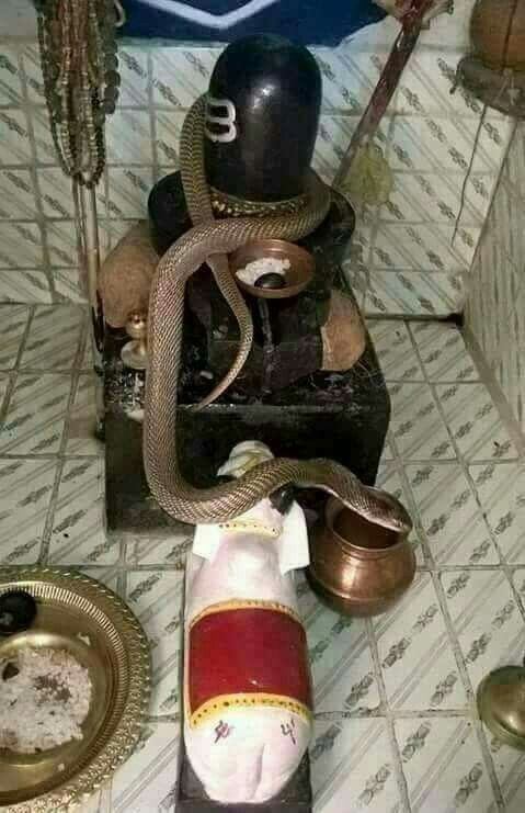 Snake on Shivling Wallpaper Pic
